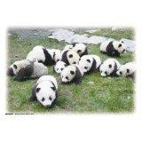108ピース パンダ ゴロゴロゴロ:ホビー.美術品,中国商品市場,中国貿易,中国企業情報